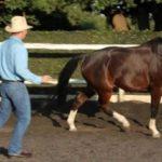 Jenku Equine Mastery – Natural horsemanship and clicker training